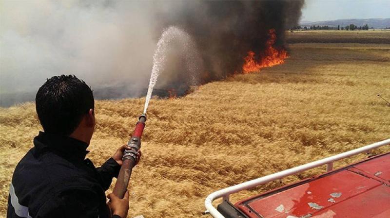 Zaghouan: 50 ha de céréales incendiés à El Fahs