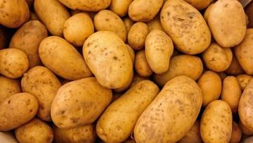 وزارة الفلاحة: ''البطاطا الموردة والمحلية سليمة''