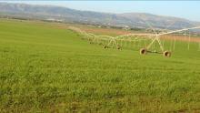 الكاف: صعوبات كبيرة خلال موسم الزراعات الكبرى