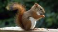 Sidi Bourouis : 30 écureuils découverts dans une voiture