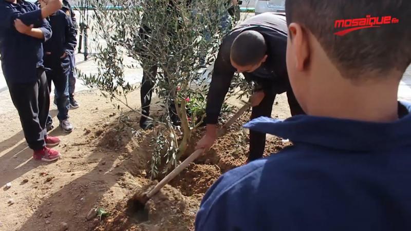 داناو تزرع شجرة