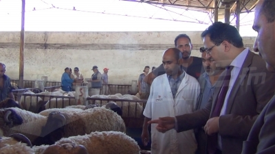Laadheri: La Société des viandes propose des moutons à prix raisonnables