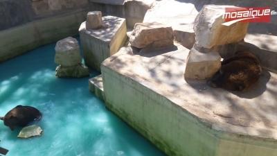 Al Fayda avec Hana: Que pensent les tunisiens du zoo du Belvédère?