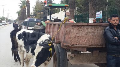 Jendouba: Les agriculteurs expriment leur colère