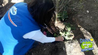 بكعبة  داناو تساهم في زرع شجرة