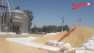 Samir Taieb inaugure la saison de récolte à Béja