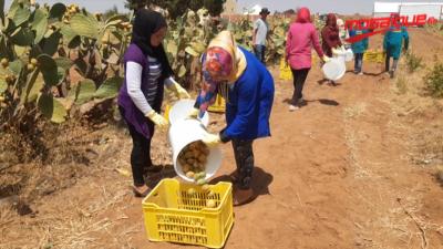 Festival international du Cactus à Kasserine