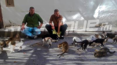 Tozeur: Des bénévoles prennent soin des  animaux
