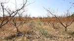 Suite à une visite à la Manouba: le ministre de l'agriculture transfère le dossier d'une ferme à la justice