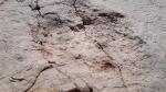Tataouine : Découverte de traces de dinosaures