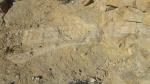 Tataouine: découverte de traces de pas de dinosaure
