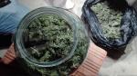 Il cultivait de la marijuana dans le jardin de sa maison