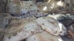 Tataouine: saisie de marchandises de contrebande