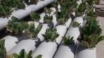 Tataouine: la Pisciculture prospère grâce aux plantations aquatiques