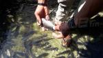 بدعم طلبة من تونس: الغراسات المائية تنعش مشروع تربية الأسماك في تطاوين