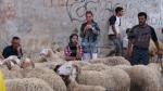 اضاحي العيد: المواطن يشتكي غلاء الأسعار والفلاح والقشار   يبحثان استعادة الخسائر