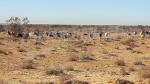 إعادة توطين 'مها أبو الحراب' في عدد من البلدان انطلاقا من محمية دغومس