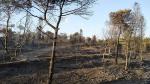 Béni Khiar : Un incendie se déclare dans une pinède