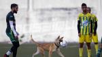 Amical: Avenir S.Marsa (1-1) Club S.Hammam Lif